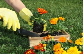 jardinagem2